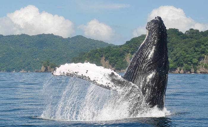 Costa Rica Whale and Dolphin Watching Tour
